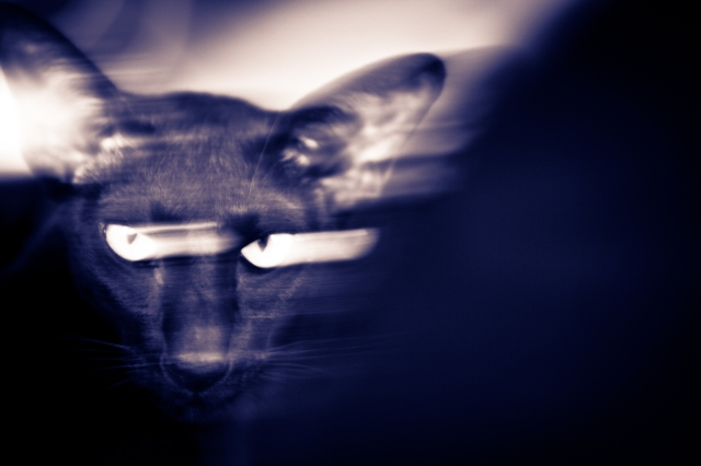 a long exposure post processed photo of an oriental shorthair black cat looking into the camera
