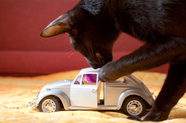 a photo of a black oriental cat playing with a toy mouse near a toy car