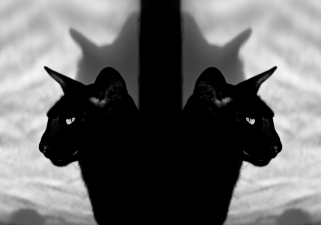 a crazy reflected black and white photo of a black oriental shorthair cat