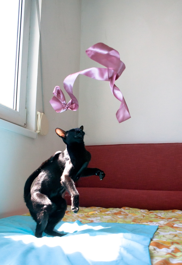 a photo of a black oriental shorthair cat seeing a pink silk ribbon flying over her head