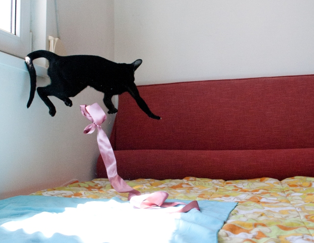 a photo of a black oriental shorthair cat jumping very hight and far away while escaping from a pink silk ribbon