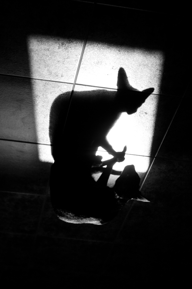 an abstract black and white photo of an oriental cat shadow