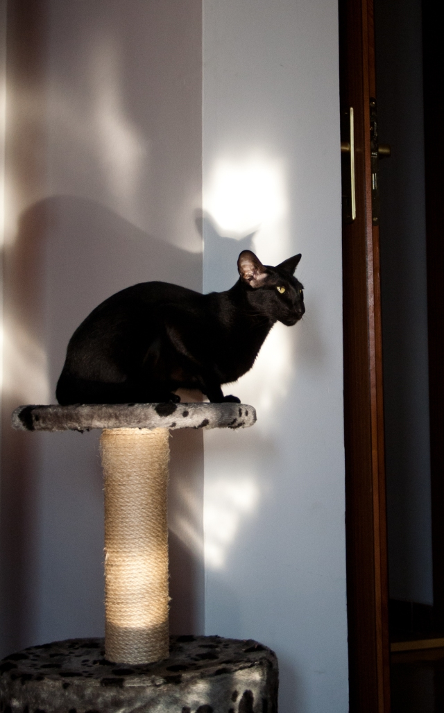 a cat sitting in the spot of light on her post