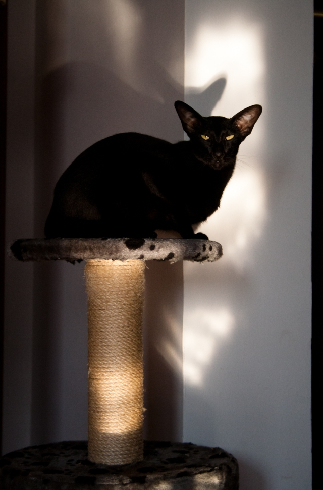 a cat sitting in the spot of light on her post and looking at the camera